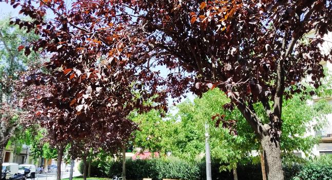L'Ajuntament millorarà els arbres d'una desena de carrers del Districte 6, al sud de Sabadell