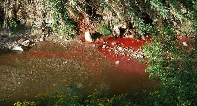 L'Ajuntament obre diligències per esbrinar el responsable d'un abocament incontrolat al riu Sec