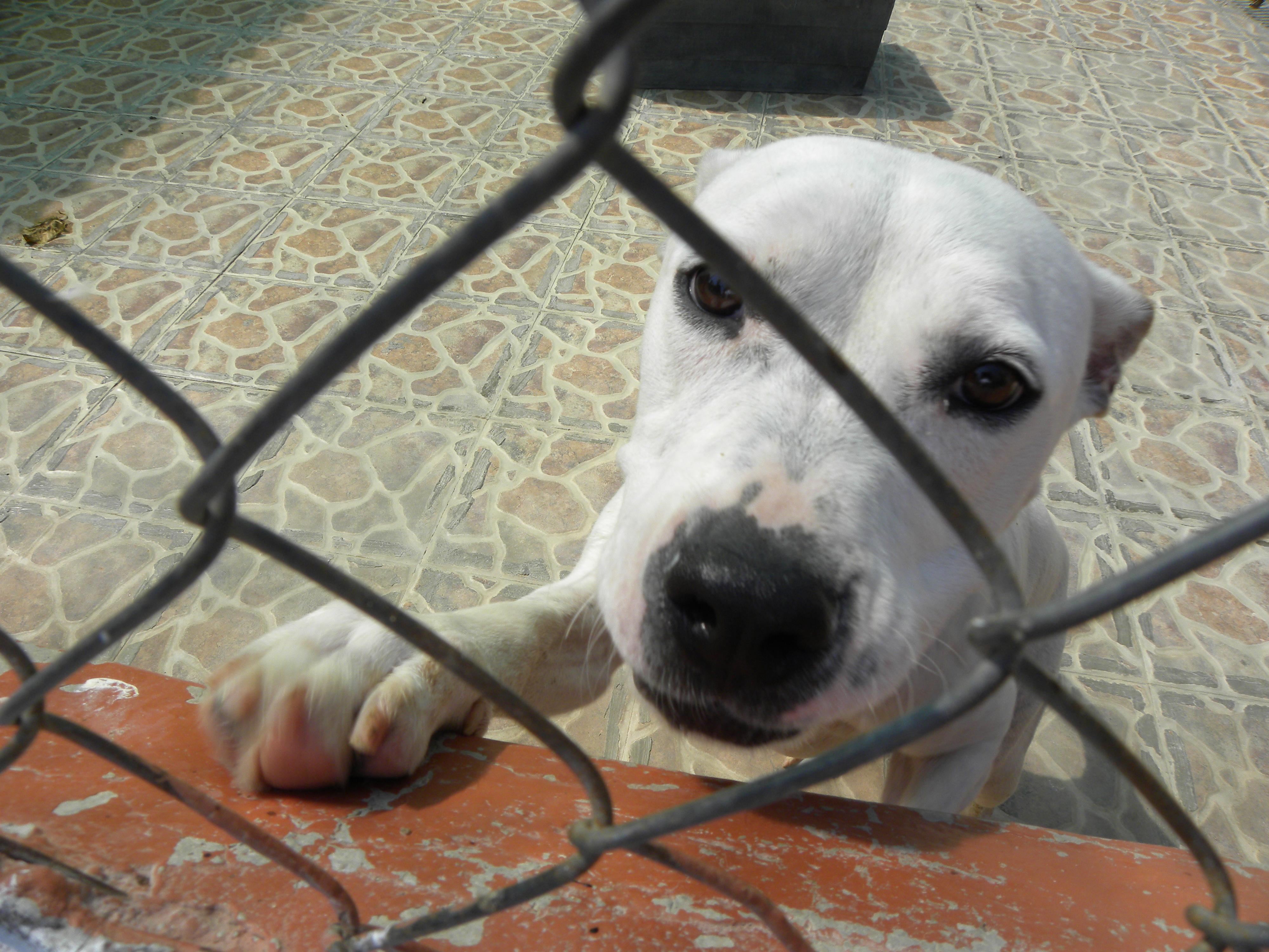 Primer rodatge a la Lliga Protectora d'animals de Sabadell