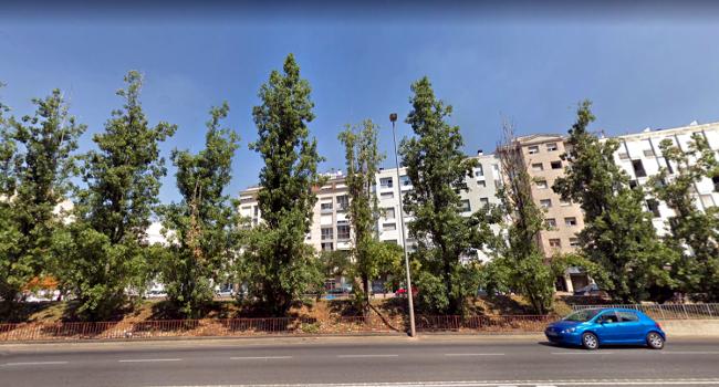 L'Ajuntament talarà els pollancres malmesos a la plaça dels Jocs Florals