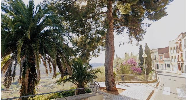 L'Ajuntament substituirà per espècies més idònies els sis exemplars de pi blanc que es talaran al carrer de Santa Teresa