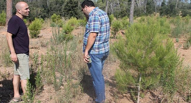 Visita al bosc de Can Deu per fer seguiment del procés de recuperació