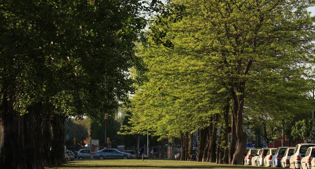 Una desena de carrers del Districte 6 tindran millores en l'arbrat