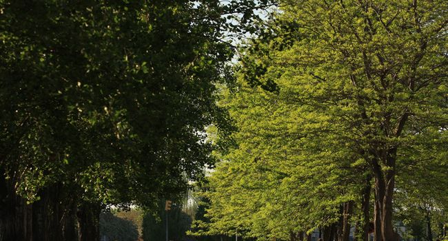 L'Ajuntament substitueix més de 70 arbres a diferents carrers de la ciutat