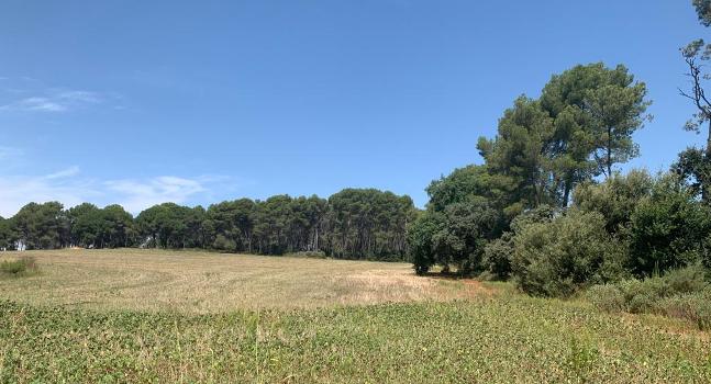 Sabadell demana incorporar la zona nord del terme municipal al Parc Natural de San Llorenç