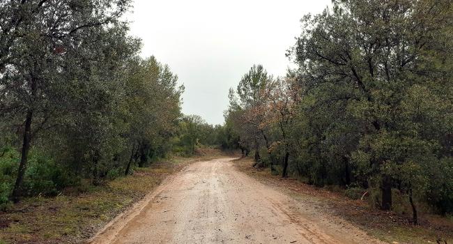 Finalitza l'arranjament dels camins de prevenció d'incendis de la serra de Sant Iscle i el camí de Barata