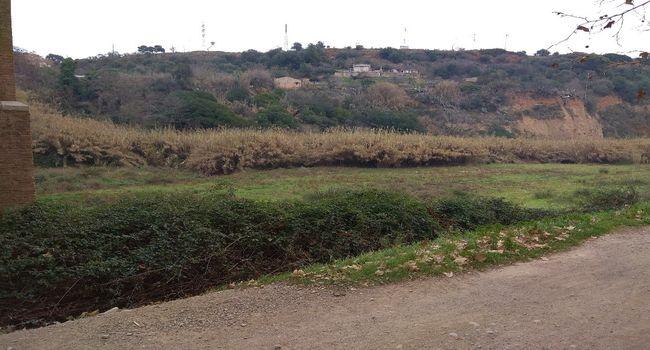 Millora del parc fluvial del Ripoll amb l'eliminació de canya americana en un tram del riu