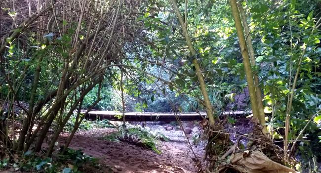 Una visita guiada a la Salut, Togores i el torrent de Colobrers, proposta de natura de la Festa Major