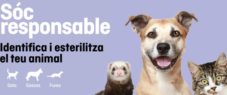 La Fundació FAADA inicia una campanya d'identificació i esterilització d'animals de companyia a preus reduïts
