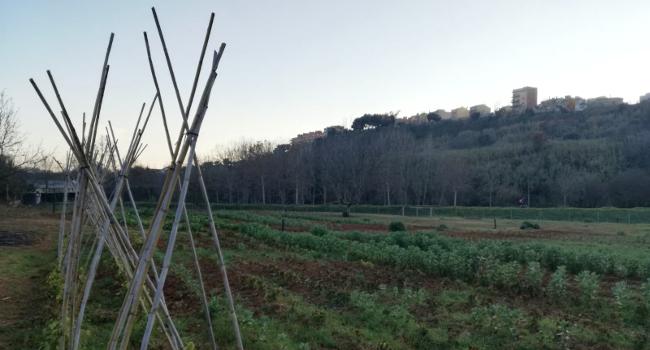 Cessió de tretze horts municipals a l'horta d'en Romau a persones amb rendes baixes