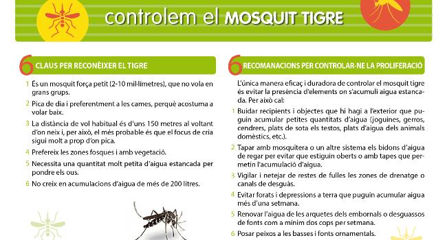 Recomanacions per evitar l'augment del mosquit tigre
