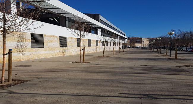Plantats més de 150 arbres dels 500 que Sabadell tindrà nous al final de març