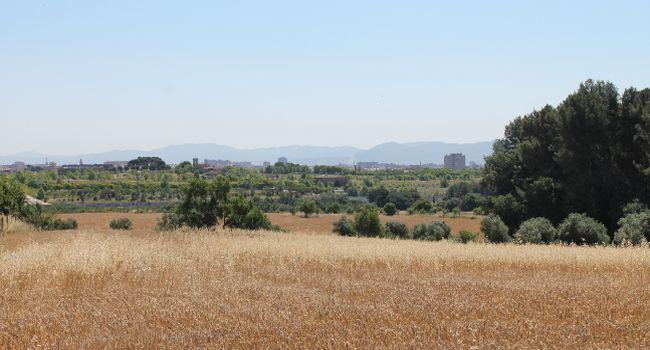 L'Ajuntament posa a disposició d'agricultors professionals prop de 45 hectàrees d'horta municipal del rodal