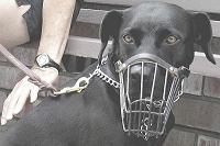 Campanya per promoure l'adopció de gossos de raça potencialment perillosa que viuen a la Lliga Protectora