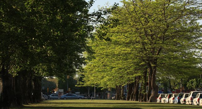 L'Ajuntament planta més de 500 arbres nous repartits pels set districtes de la ciutat