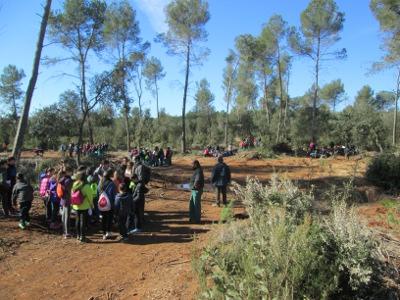 250 nens i nenes participen en una plantada escolar al bosc de Castellarnau
