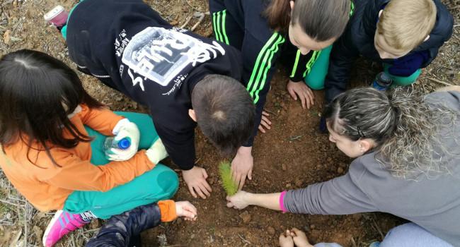 Alumnes de quatre escoles plantaran arbres i arbusts a la Salut i a Castellarnau