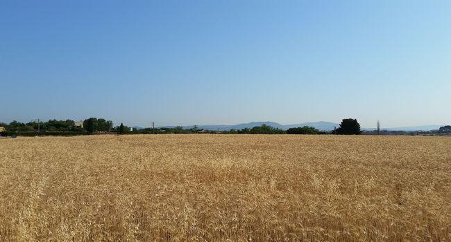 Ja es poden presentar les sol·licituds per conrear les finques de secà que l'Ajuntament té al rodal