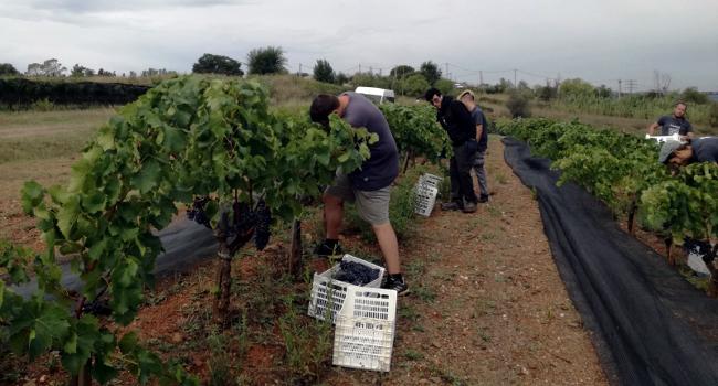 Jornada a l'entorn de l'evolució dels productes agrícoles del Parc Agrari de Sabadell